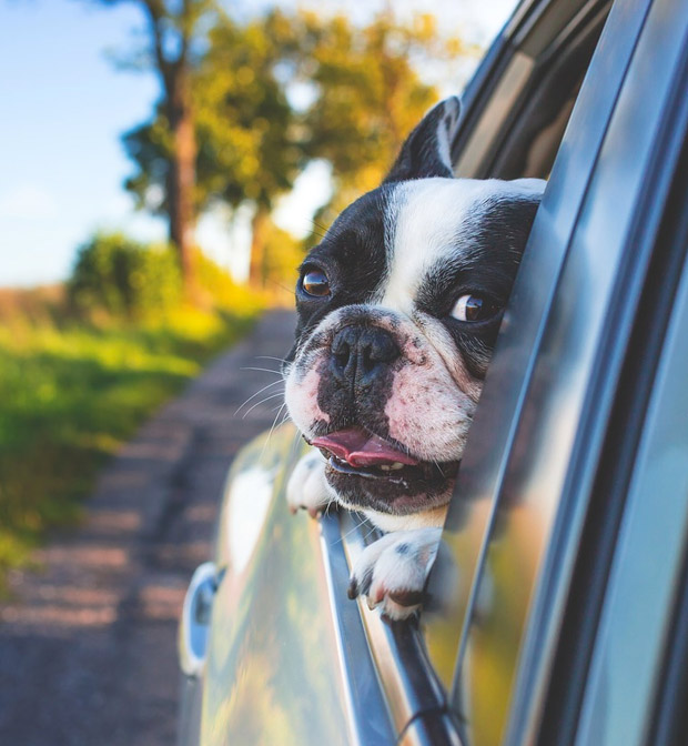 Traveling with Pets Via Car